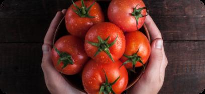 Zużyliśmy już ponad 100 000kg pomidorów